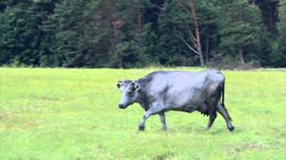 Heifer Foundation approach and examples of success in the Baltic States